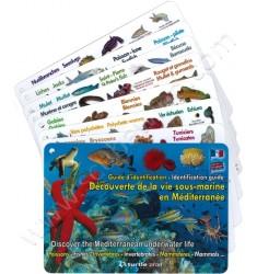 Plaquettes immergeables Découverte de la vie sous-marine en Méditerranée