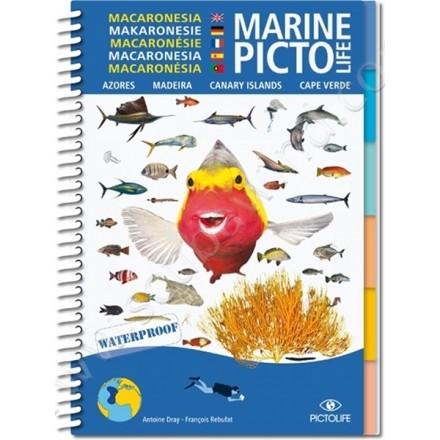 Guide D'identification Pictolife Macaronésie
