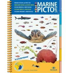 Guide d'identification Pictolife Mer Rouge - Ocean Indien