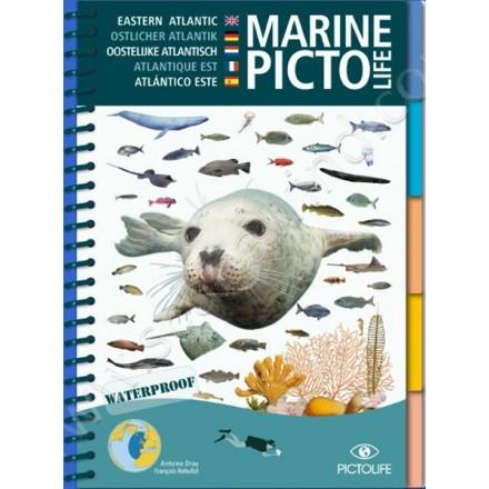 Guide d'identification Pictolife Atlantique Est