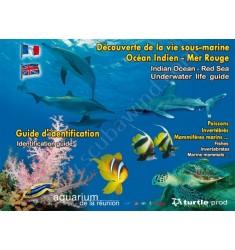 Plaquettes immergeables Découverte de la vie sous-marine Mer Rouge